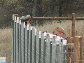 Fencing Solutions Install Fences Fencing Horse Fence
